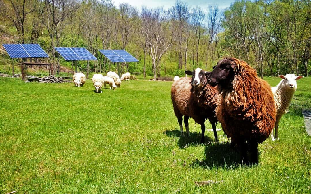 The Rural Energy For America Program (REAP)