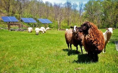 The Rural Energy For America Program (REAP)